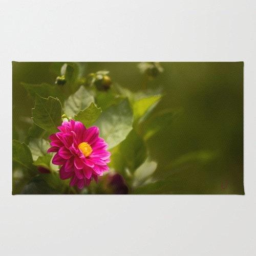 Dark Pink Dahlia in the Garden